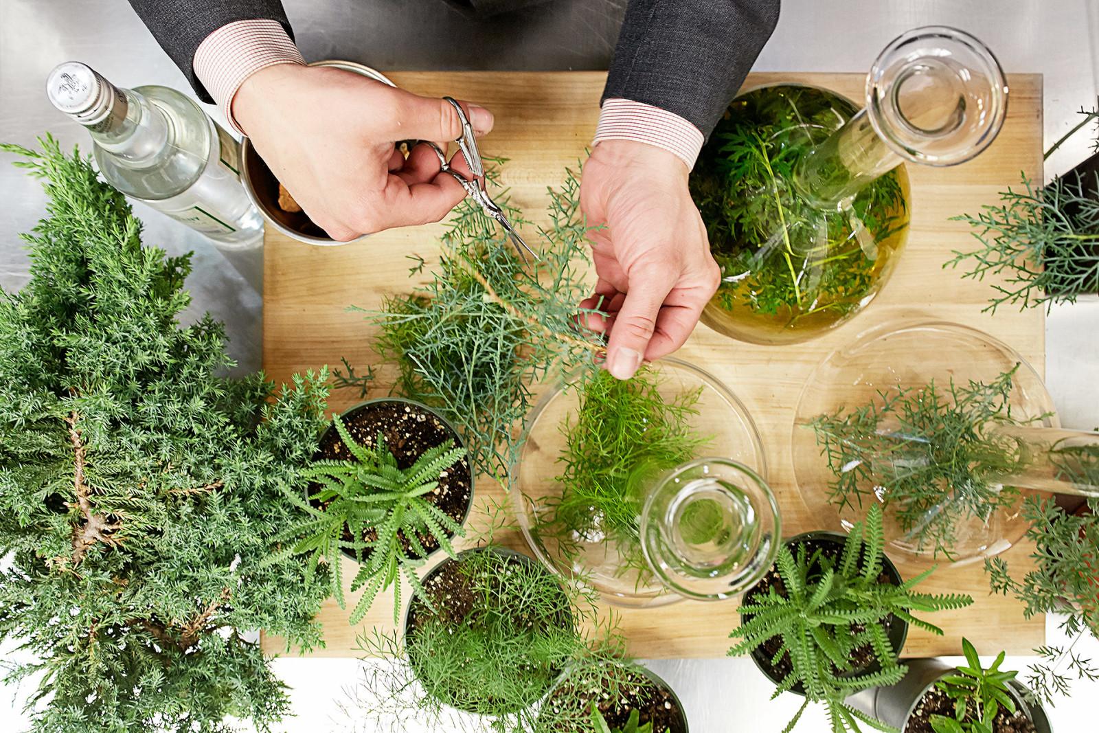 Atera - herbs