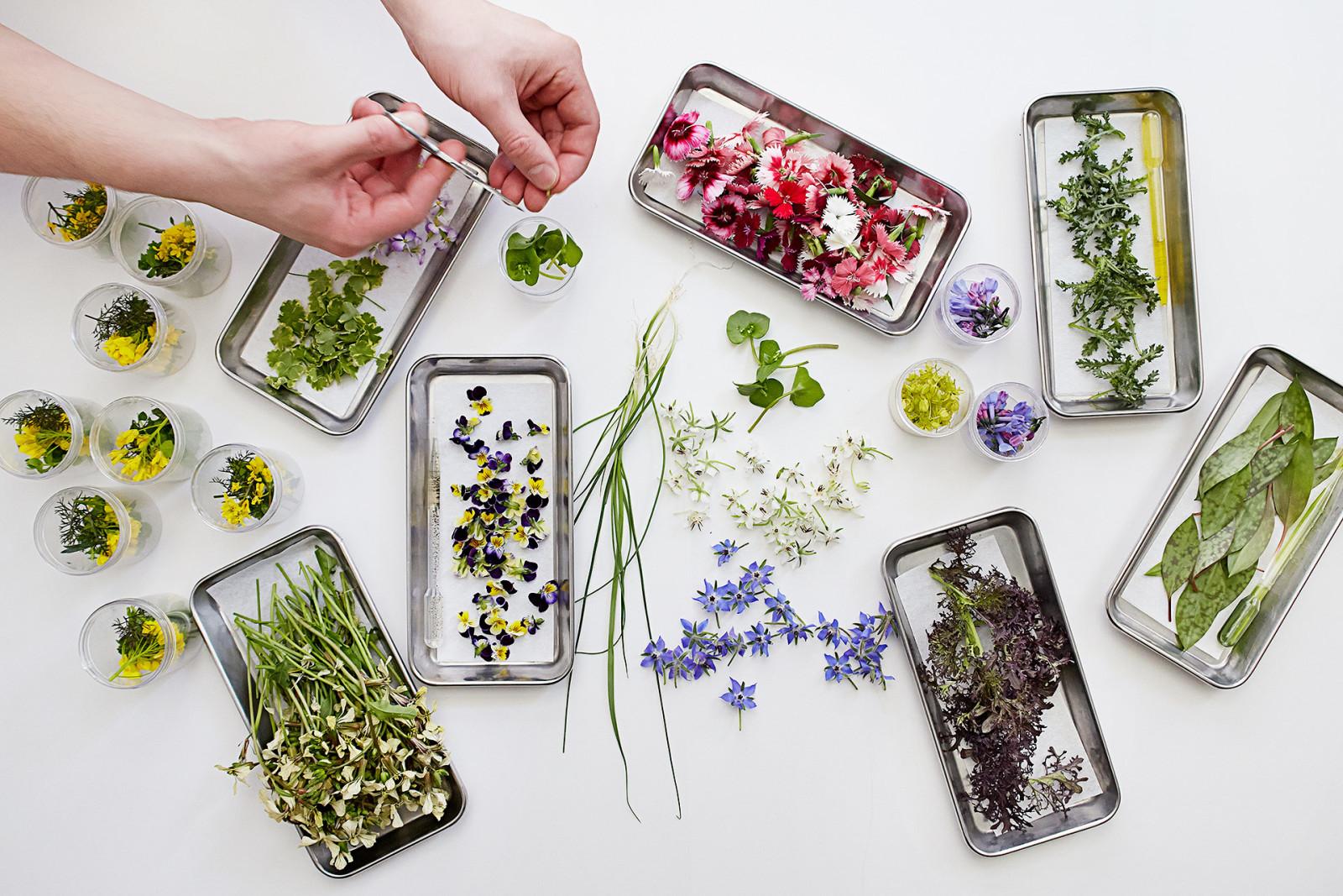 Atera - flowers